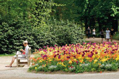 parc-floral-tulipes